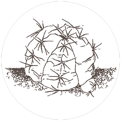 b&b castellaro piante grasse a parma
