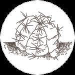 castellaro cactus